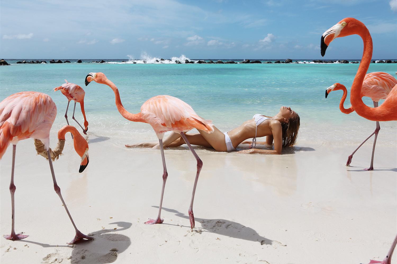 кандиру фламинго картинки и человек конструкцию ножками